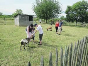 Les visiteurs pouvaient s'approcher au plus près des animaux sous les yeux de Cyril qui veille à leur bien-être.