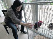 présentation essai médiation animale chien senior
