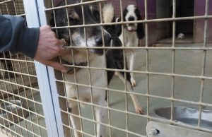 SPA Chamarande adoption chien portes ouvertes
