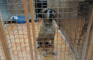 Baloo chien SPA Chamarande