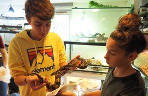 sos ptites betes etampes association reptiles