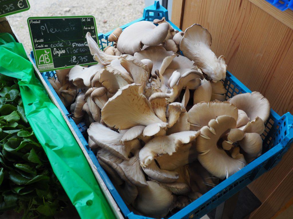 potagers de Marcoussis association chantier de réinsertion professionnelle Essonne maraîchage agriculture biologique