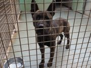 chien spa refuge Chamarande