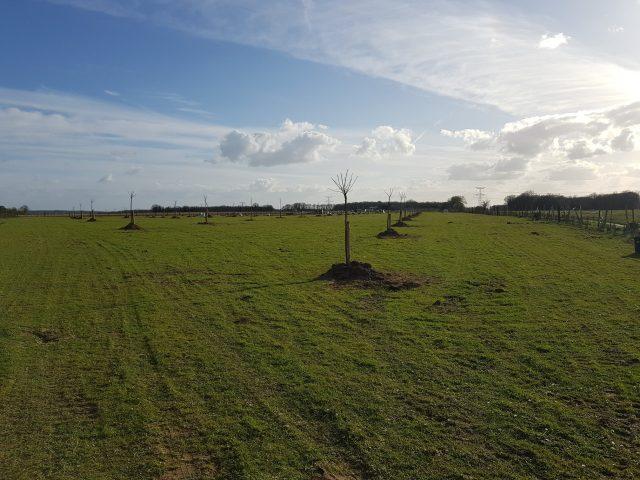 Le verger compte plus de 80 arbres fruitiers. © Agrofîle