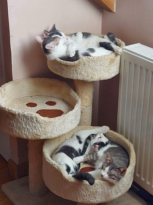 association Dourdan Cara-pattes chatons famille d'accueil
